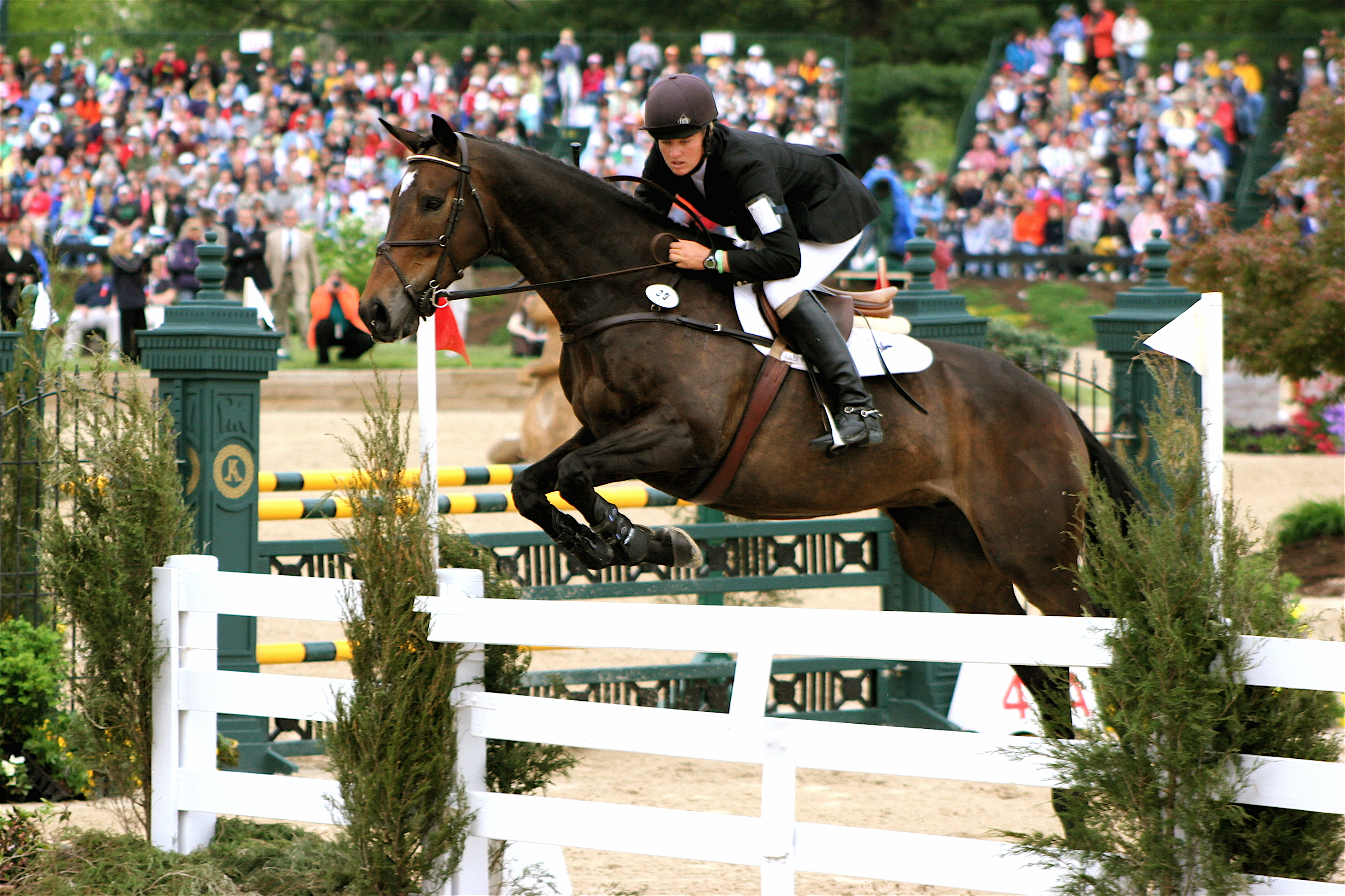 Experience Canada S Largest Variety Of Horse Breeds And Jumping Events Rm Show Jumping